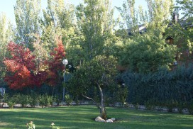 Mantenimiento jardín Madrid